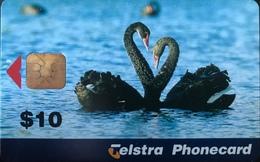 AUSTRALIE  -  Phonecard   -  Telstra Phonecard  -  Black Cygnus  -  $ 10 - Australia