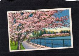 94494   Stati  Uniti,   Cherry  Blossom  Time At  Potomac Park,   Washington,  D. C.,  NV - Washington DC