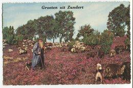 Netherlands - Zundert - Shepherd - Autres