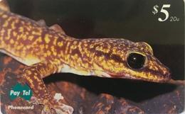 AUSTRALIE  -  Phonecard  -  Pay-Tel  -  Marbled Velvet Gecko  -  $ 5 - Australië
