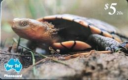 AUSTRALIE  -  Phonecard  -  Pay-Tel  -  Western Swamp Turtle  -  $ 5 - Australië