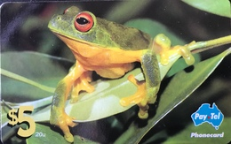 AUSTRALIE  -  Phonecard  -  Pay-Tel  - Red-Eyed Tree Frog  -  $ 5 - Australië