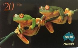 AUSTRALIE  -  Phonecard  -  Pay-Tel  - Red-Eyed Tree Frog  -  $ 20 - Australië