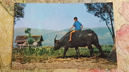 Burma Tribes - Little Boy Riding Buffalo - Old Postcard - Burma Stamps - Myanmar (Birma)