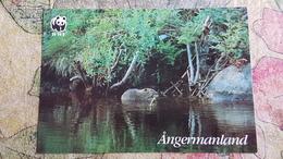 BEAVER  -  Castor Fiber     Rare WWF Postcard  - - 2000s - Bears