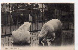 DC2212 - Bären Ours Blancs - Bears