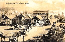 Weighbridge Potato Season , Jersey - Jersey