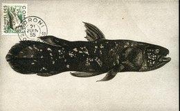 55055 Comores, Maximum  1955  Prehistory  Coelacanthe, Prehistoric Fish,poisson Préhistorique, R - Prehistory