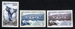 Terres Australes 1956 Yvert 2 - 4 - 5 ** TB Non Dentele - Terres Australes Et Antarctiques Françaises (TAAF)