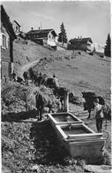 CPSM - CLAMBIN Près Verbier (les Vaches Rentrent Au Bercail) - VS Valais