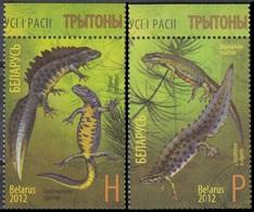 Belarus 2012 Fauna Triton MiNr.922-23 - Bielorrusia