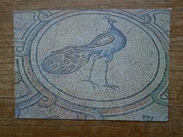 Israël , Beit Shean , Byzantine Mosaic Floor - Israel