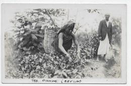 Ceylon - Tea Picking - Sri Lanka (Ceylon)