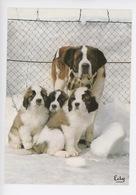 Chien - La Rosière Montvalézan élevage Relais Du Petit Saint Bernard (mère Et Chiot) - Hunde