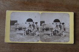 Photo Stéréoscopique  Second Empire  Les Boeufs D'Auvergne  Les Paysans - Stereoscopic
