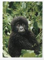 POSTCARD - ANIMALS - MOUNTAIN GORILLA - USED - 1999 - SWEDEN - WWF - PANDA LOGO  Backside - Scimmie
