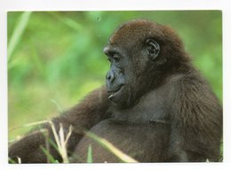 POSTCARD - ANIMALS -  GORILLA - USED - 2005 - SWEDEN - WWF - PANDA LOGO  Backside - Scimmie