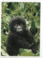 POSTCARD - ANIMALS - MOUNTAIN GORILLA - USED - 2009 - SWEDEN - WWF - PANDA LOGO  Backside - Scimmie