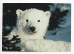 POSTCARD - ANIMALS - POLAR BEAR - USED - 2008 - SWEDEN - WWF - PANDA LOGO  Backside - Orsi