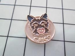 410b Pin's Pins / Beau Et Rare / THEME : ANIMAUX / PETIT CHIEN MARRON GENRE FOX C.RICO - Animales