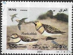 IRAQ 2007 Birds -  500d - Pterocles Alchata (Pin-tailed Sandgrouse) FU - Iraq