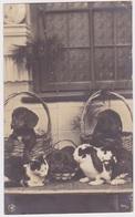 4x Teckel, Dachshund, Signed, Beautiful Cpa Postcard 1909.Carte Photo/type Fotokaart - Chiens