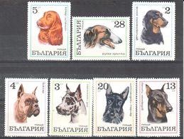 Bulgaria Dogs - MNH - Postzegels