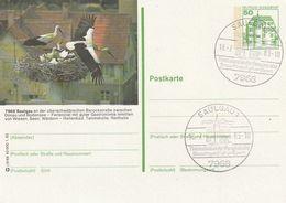 """Bundesrepublik Deutschland / 1982 / Bildpostkarte """"SAULGAU"""" Mit Bildgleichem Stempel (BM01) - [7] Federal Republic"""