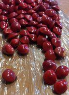 10 Graines Lucky Red De L'ADENANTHERA PAVONINA (SAGA TREE) Arbre Du Patrimoine De Singapore.Symbole De L'Amour En Chine - Santons/Fèves