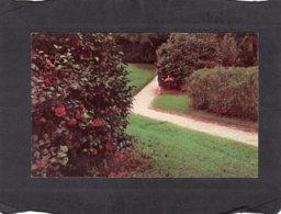 94519    Stati  Uniti,   Camellias  In  Middleton  Gardens,  Charleston, S. C.,  NV - Charleston