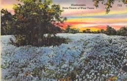 USA Etats Unis ( TX Texas ) Flower Fleur : BLUEBONNETS ( Lupin Fleurs Bleues )  Jolie CPA Colorisée 1948 - North America - Etats-Unis