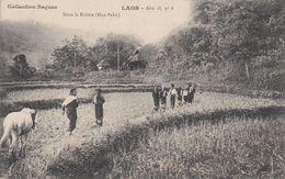 LAOS Dans La Rizière (Hua Pahn) - Laos
