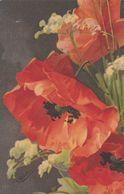 Klein Catharina  -  Ediz.  Wenau - Pastell  ,  N°. 516 - Klein, Catharina