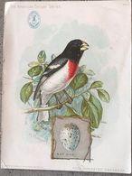 Chromo 11x15 Rose Breasted Grosbeak By Ridgway- Singer Manufacturing N°1 - Trade Cards