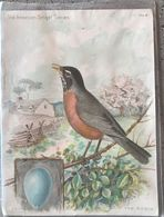 Chromo 11x15 The Robin By Ridgway- Singer Manufacturing N°8 - Trade Cards
