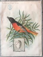 Chromo 11x15 Baltimore Oriole By Ridgway- Singer Manufacturing N°2 - Trade Cards