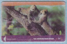UKRAINE /  Phonecard / GSM+NMT / UMC / Mobile Communications. Animals Fauna Leopards. 02/99 - Oekraïne