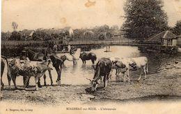 MIREBEAU (Côte D'Or 21) L'ABREUVOIR  CARTE ECRITE 21.04.1916 - Mirebeau
