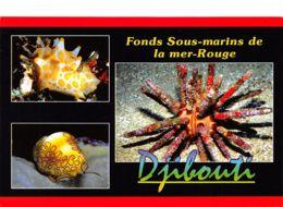 975  DJIBOUTI MER ROUGE  32-0741 - Djibouti