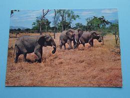 ELEPHANTS > MIKUMI Game Park ( Dusara ) Anno 19?? ( Zie Foto ) ! - Tanzanía