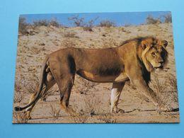 PROWL Of The PREDATOR ( PTY ) Anno 19?? ( Zie Foto ) ! - Lions