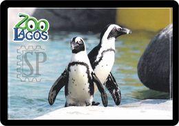 Portugal Zoo Lagos Pinguim Manchot Penguin - Birds