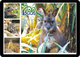 Portugal Zoo Lagos Canguru Kangaroo Kangourou Känguru Suricata Meerkat Suricate Lince Lynx Bobcat - Animals