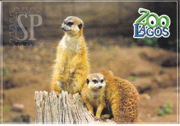 Portugal Zoo Lagos Suricata Meerkat Suricate - Animals