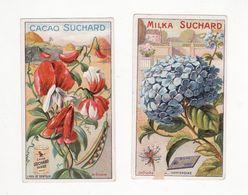 Chromo  CHOCOLAT SUCHARD    Lot De 2     Série 272    Fleurs     10.6 X 6 Cm - Suchard
