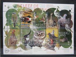 FG297b FAUNA VOGELS UIL DUIF GRUTTO KIEVIT PATRIJS PARTRIDGE DOVE OWL BIRDS VÖGEL AVES OISEAUX NEDERLAND 2020 PF/MNH - Birds