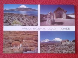 POSTAL CARTE POSTALE POST CARD CHILE CHILI PARQUE NACIONAL LAUCA NATIONAL PARK VISTAS VICUÑA ARICA V. PARINACOTA YARETA - Chile