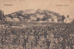 Korolevo - 1916 , Kralovo , Kiralyhaza , KUKURUZA , Maize , Maïs ,  Zakarpattya  , Podkarpatska Rus - Ukraine