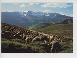 Alpage Et Les Grandes Rousses (cp Vierge N°05/156) Mouton Troupeau Moutons - Autres Communes