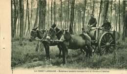 040620A - 40 FORET LANDAISE Résinage Des Pins - Muletiers Landais Transportant La Résine à L'atelier - Mule Attelage - Unclassified